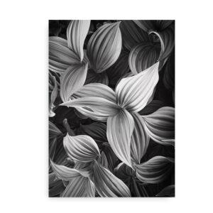 Green Plant Leaves - fotokunst plakat blade - sort hvid