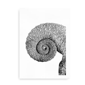 Jackson's horned chameleon - fotografi af kamæleon - sort hvid