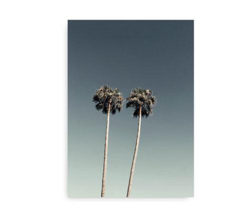 Palm Trees - poster med palmer
